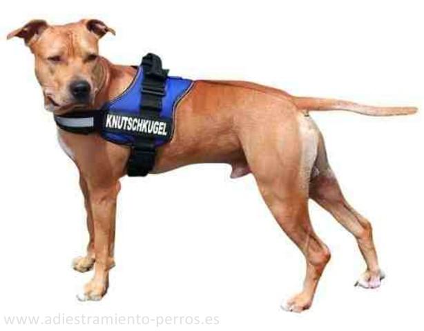 9b4b349b069c Julius k9 es una marca muy reputada en todo en mundo de productos  especialmente diseñados para perros de trabajo. Debido a la cada vez mayor  demanda de un ...